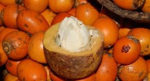Тукума – екологично гориво и богата грижа за кожата